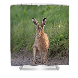 Brown Hare Sat On Track At Dawn Shower Curtain