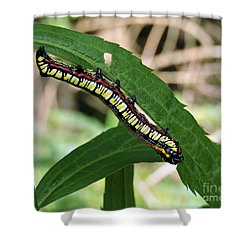 Brown Hooded Owlet Moth Larva  Shower Curtain
