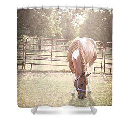 Shower Curtain featuring the photograph Brown Horse In A Pasture by Kelly Hazel