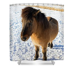 Shower Curtain featuring the photograph Brown Icelandic Horse In Winter In Iceland by Matthias Hauser