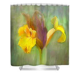 Brown Iris Shower Curtain by Angela A Stanton