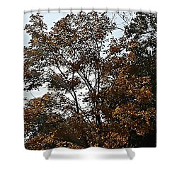 Brown Shower Curtain by Jana E Provenzano