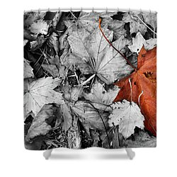 Brown Maple Leaf Shower Curtain