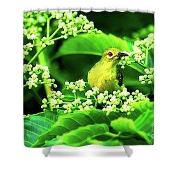 Brown Neck Sunbird Shower Curtain