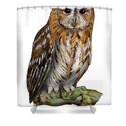 Brown Owl Or Eurasian Tawny Owl  Strix Aluco - Chouette Hulotte - Carabo Comun -  Nationalpark Eifel Shower Curtain