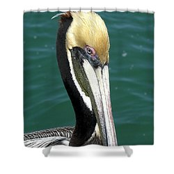 Brown Pelican  Shower Curtain by Allan  Hughes