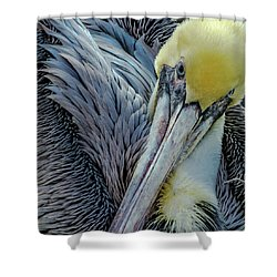 Shower Curtain featuring the photograph Brown Pelican by Bill Gallagher