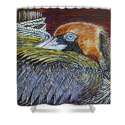 Brown Pelican Shower Curtain by David Joyner