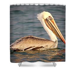 Brown Pelican Floating Shower Curtain