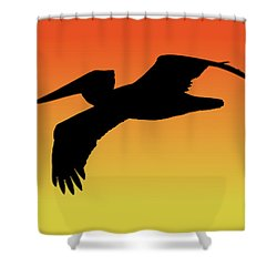 Brown Pelican In Flight Silhouette At Sunset Shower Curtain