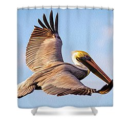 Brown Pelican In Flight - Two Shower Curtain