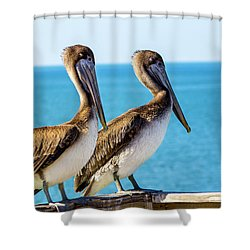 Brown Pelican Pair Shower Curtain