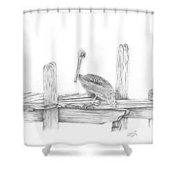 Brown Pelican Shower Curtain by Patricia Hiltz