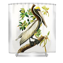 Brown Pelican Shower Curtain by Pg Reproductions