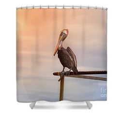 Brown Pelican Sunset Shower Curtain by Robert Frederick
