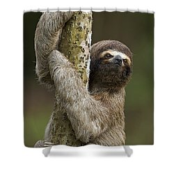 Brown-throated Three-toed Sloth Shower Curtain by Ingo Arndt
