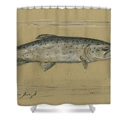Brown Trout Shower Curtain by Juan Bosco