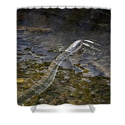 Brown Water Snake Shower Curtain