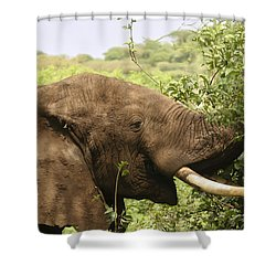 Shower Curtain featuring the photograph Browsing Elephant by Gary Hall