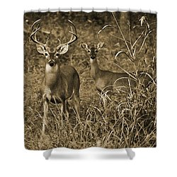 Buck And Doe In Sepia Shower Curtain