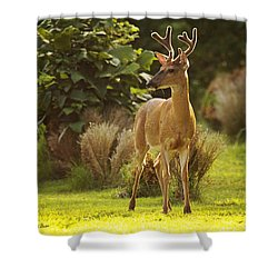 Shower Curtain featuring the photograph Buck by Angel Cher