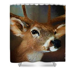 Shower Curtain featuring the photograph Buck by Darren Fisher