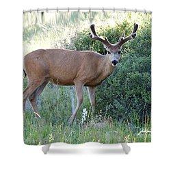 Buck In Velvet Shower Curtain