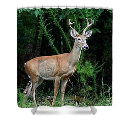 Buck Shower Curtain