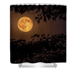 Shower Curtain featuring the photograph Buck Moon 2016 by Everet Regal