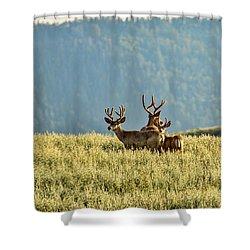 Buck Mule Deer In Velvet Shower Curtain