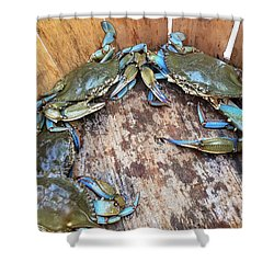 Bucket Of Blue Crabs Shower Curtain