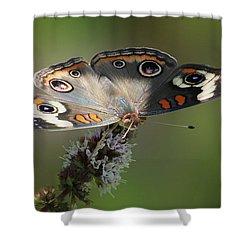 Buckeye Beauty Shower Curtain by Anita Oakley