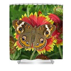 Buckeye On Blanketflower Shower Curtain