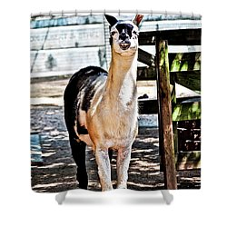 Bucktoothed Llama Shower Curtain