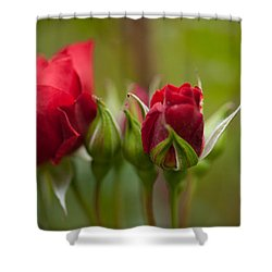 Bud Bloom Blossom Shower Curtain by Mike Reid