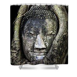 Buddha Head In Banyan Tree Shower Curtain