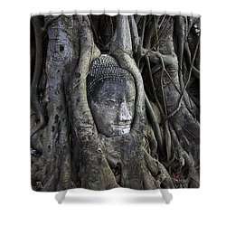 Buddha Head In Tree Shower Curtain