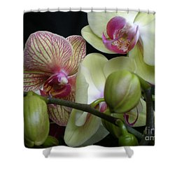 Budding Orchids  Shower Curtain