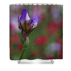 Budding Purple Iris Shower Curtain