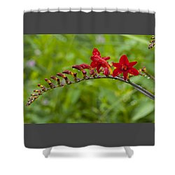 Budding Red Shower Curtain