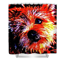 Shower Curtain featuring the photograph Buddy by Xn Tyler