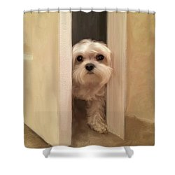 Shower Curtain featuring the photograph Hello by Lois Bryan