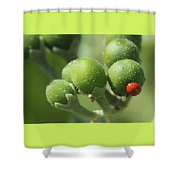 Buds And Bugs Shower Curtain