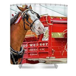 Budweiser Clydesdale In Full Dress Shower Curtain
