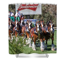 Budweiser Clydesdales Perfection Shower Curtain