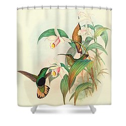 Buff Tailed Velvet Breast Shower Curtain by John Gould