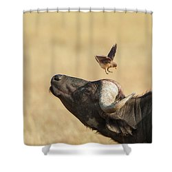 Buffalo And Oxpecker Bird Shower Curtain