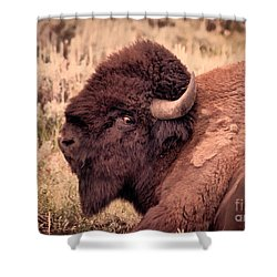 Shower Curtain featuring the photograph Buffalo Eye On You by Janice Rae Pariza
