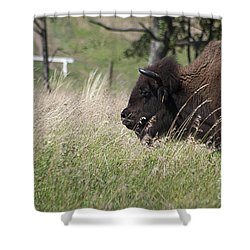 Buffalo Gal 20120724_378a Shower Curtain