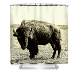 Buffalo In Sepia Shower Curtain